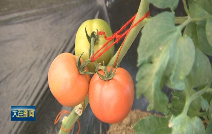 全市设施农业进入生产旺季