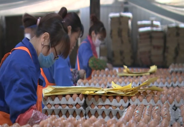 韩伟集团:融入改革浪潮 小鸡蛋孵出大企业