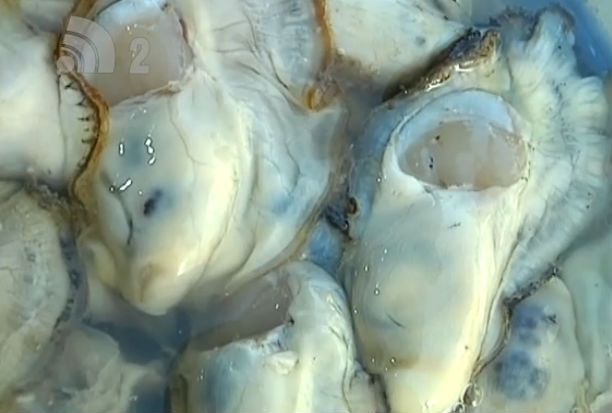 大连今冬海蛎子猪肉价格偏高