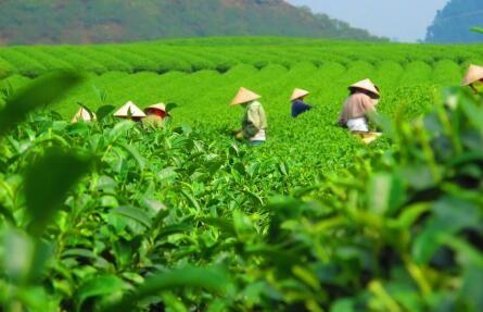 茶饮加盟哪家好,占卜の茶是创业者的最佳选择