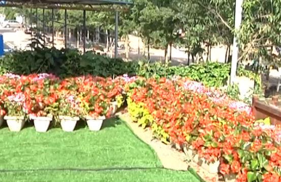 凌晨驾车偷景观花 只为建私家花园
