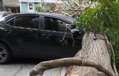 大树倒了砸了五台车 谁来赔偿?
