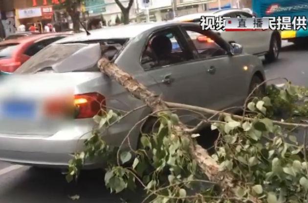 大树枝折断 砸中过路车