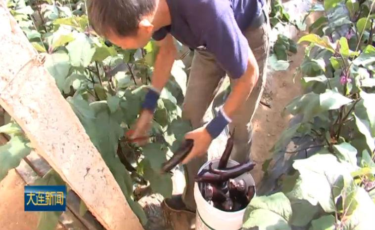 全市农民合作社达4250家 助推农业提质增效