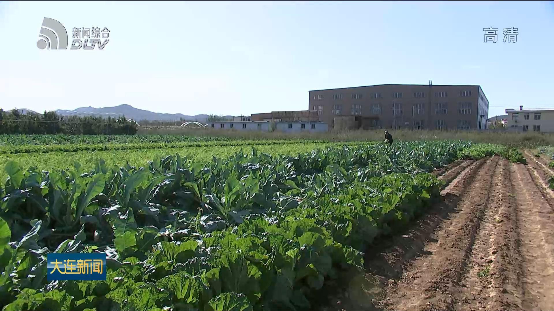 最后一茬地產露地蔬菜集中上市