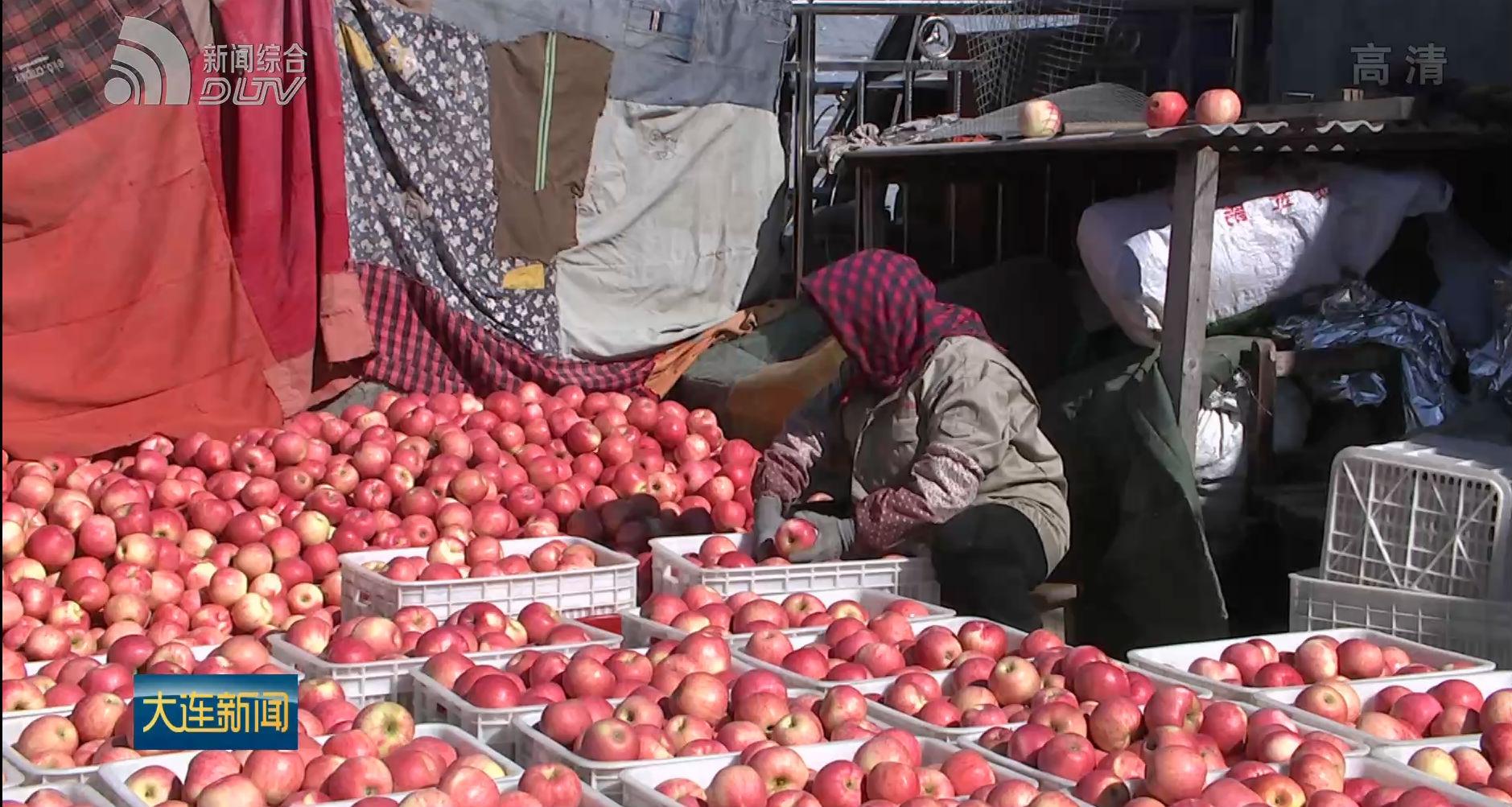 我市积极开拓市场 避免苹果滞销