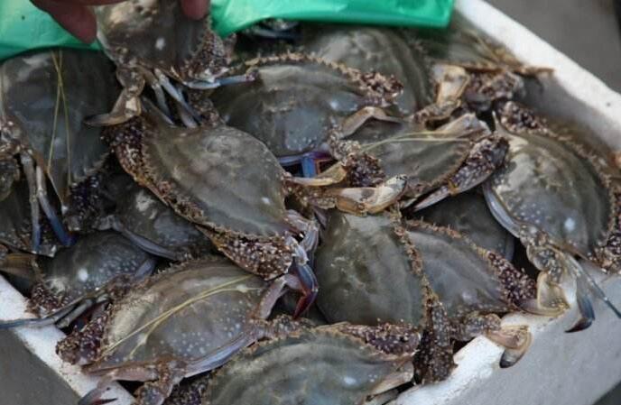 监管部门元宵节前再抽检海鲜市场