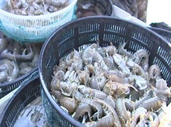 地产海鲜大量上市 价格走低