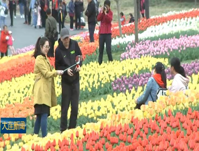 中荷球根花卉博览会在英歌石启幕