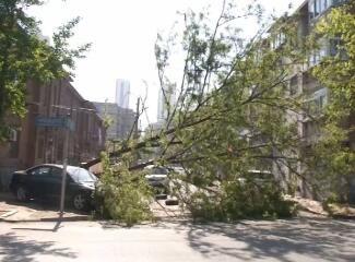 树倒砸车挡路 谁来善后成难题