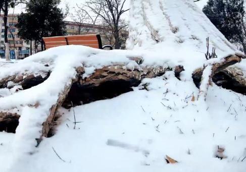 期待已久的雪