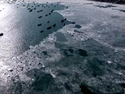 大連金石灘冬港
