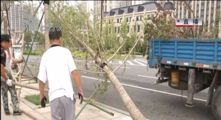 受台风影响 东港大量银杏树倒伏