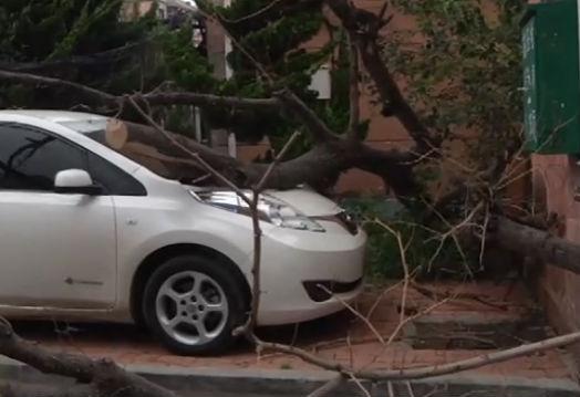 树倒砸了三辆车 车主索赔遇波折