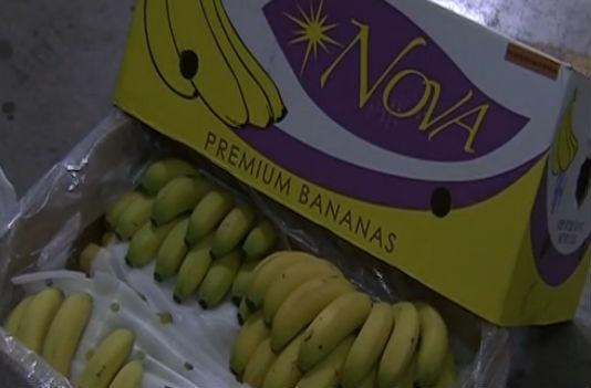 大連自貿片區將建東北亞香蕉交易中心
