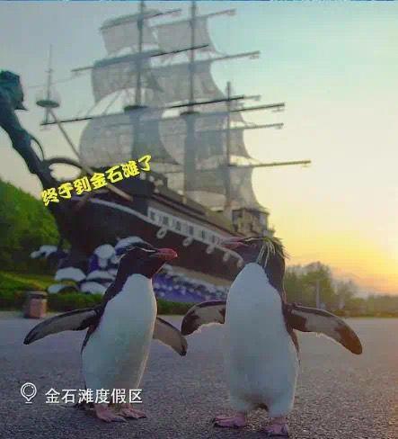 企鵝兄妹游大連:金石灘我們來啦