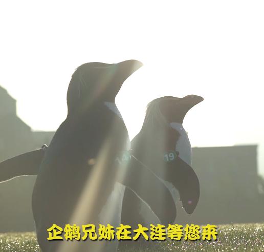 企鵝兄妹海哥虎妞游大連第四站:海軍廣場、中山廣場、人民廣場